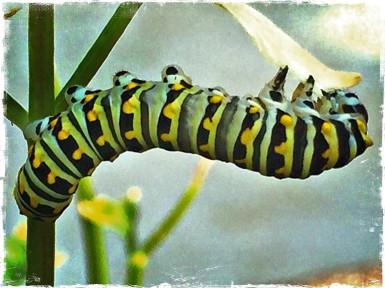 AWalker/caterpillar
